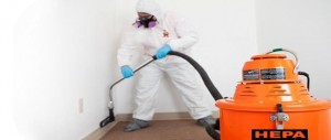 mold removal Lillington
